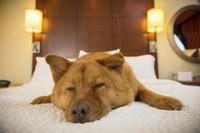 Венский отель отправляет собак своих гостей в оперу