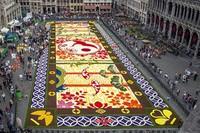 Briseles lielāko pilsētas laukumu rotā milzīgs ziedu paklājs
